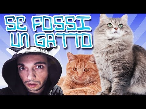 se fossi un gatto - (if i were a cat)