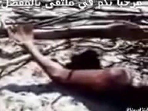 Video ظهور عروس البحر حقيقي في وادي علي download in MP3, 3GP, MP4, WEBM, AVI, FLV January 2017