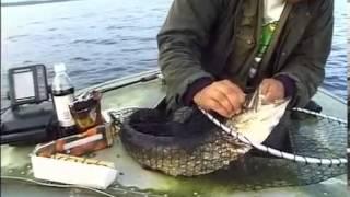 Ловля спиннингом окуня и щуки на Рыбинском водохранилище - Уха из окуня