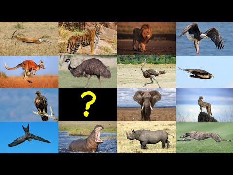 Guess the Animal Quiz: Which is the fastest?