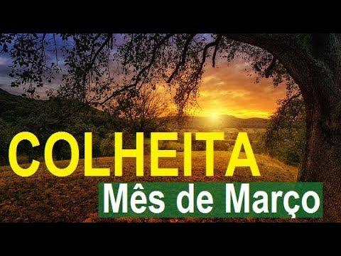 Mensagens lindas - Frutas verduras e legumes do mês de março - Ta na hora da colheita