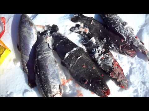 08.03.2013г Отчёт о рыбалке