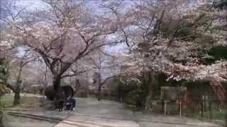 【滋賀県】琵琶湖疏水を3月から観光船がはしります!