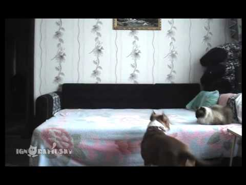 WATCH: Dog plays on bed while owner is away