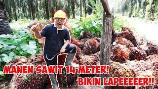 Video MANGGANG AYAM SEHABIS MANEN BUAH SAWIT!!! MP3, 3GP, MP4, WEBM, AVI, FLV Juli 2019