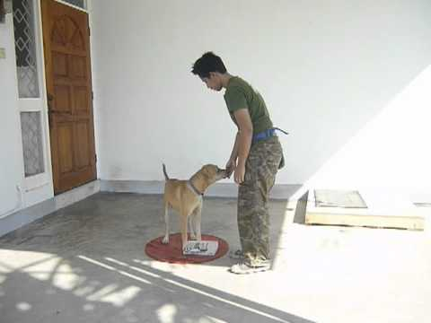 Dog Training: Heel – Day 1 with Gabriel