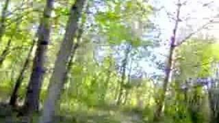 7. Ride through the woods on 2008 Honda CRF230L
