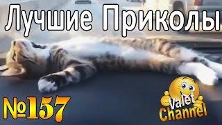 ПРИКОЛЫ 2016 Ноябрь | Лучшая Подборка Приколов #157 Funny Videos