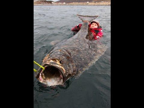 這個男子海釣遇到驚喜!竟然釣到了比人還大的巨魚!