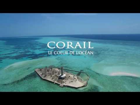 "Teaser ""Corail, coeur de l'océan"""