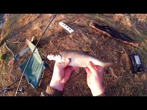 Рыбалка на реке лиелупе