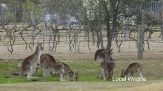 Stanthorpe Australia  City new picture : Country Style Caravan Park, Stanthorpe, Queensland, Australia