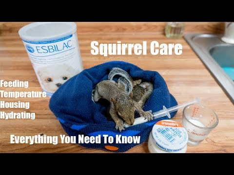How to Take Care of a Baby Squirrel - Everything You Need to Know