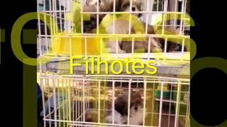 1° Encontro de Cães & Criadores de Itabira 2010