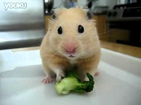 超可愛小鼠