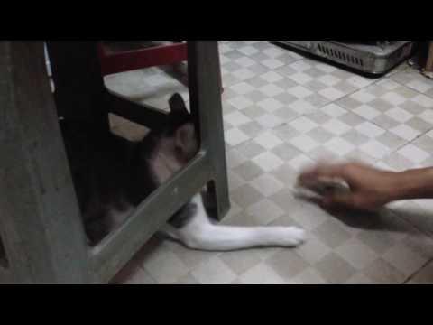 Mèo ngu ngốc
