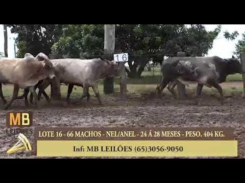 182º LEILÃO VIRTUAL MB LEILÕES