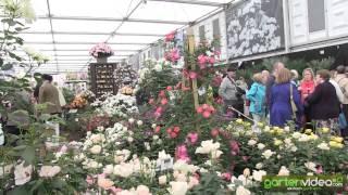 #1232 Chelsea 2013 - Pflanzenzüchter Harkness und die persische Rose