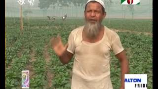 Foreign vegetable farm grows fast in Bangladesh