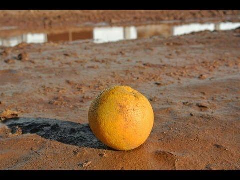 Embertelen munkakörülmények Brazília, narancsszedők