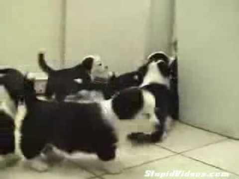 Gato em cena Matrix