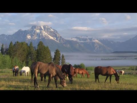 Triangle X Ranch - Jackson Hole, Wyoming