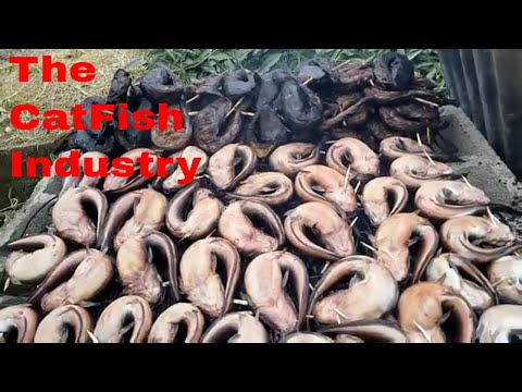 Nigerian Local Way Of Drying Catfish