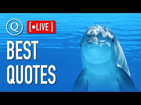 Family quotes - Quotes - Live Stream 24/7 - Ambient - Chillout