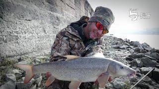 Paduc és márna horgászat a Margit hídnál
