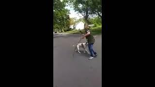 Pitbull uratował swoją właścicielkę przed atakiem innego psa
