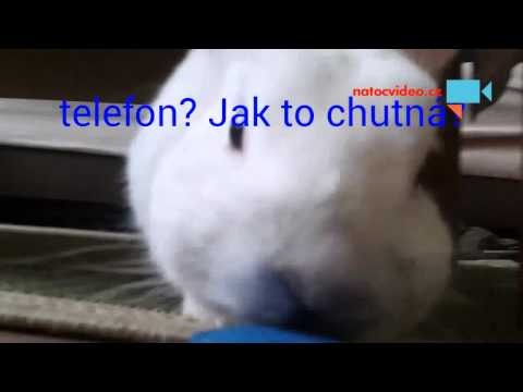 Zvědavý králíček VENDULKA