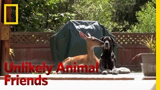 Unlikely Animal Friends Preview