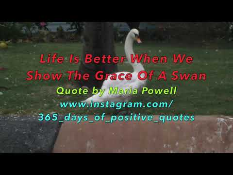 Positive quotes - Swan Beauty Quotes - 365 Days Of Inspirational  Quotes - YouTube Videos - Day 48 - 17 Feb 2018
