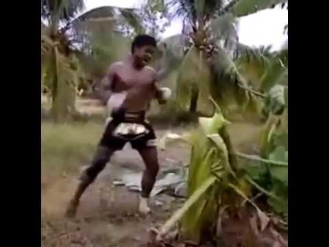 Distrugge un albero a calci! incredibile!