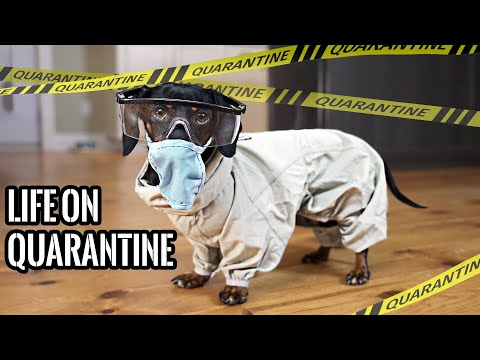 Ep#1: QUARANTINE LIFE - Funny Wiener Dogs Staying Home!