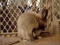 El real conejo Energizer