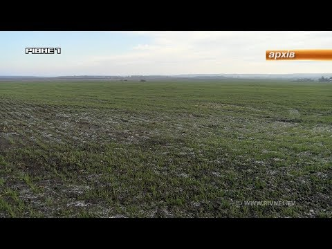 На Рівненщині завершився процес розпаювання землі Мирогощанського іподрому [ВІДЕО]