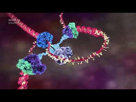 Как работает ДНК