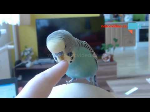 Andulka Čiko neni žádné béčko a umí i něco Anglicky :-)