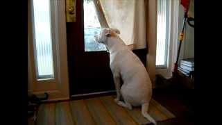 Soldado retorna e é bem recebido pelo pitbull