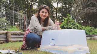 Video Grow Salad Greens All Winter For Less Than 20 Dollars | Gardening Tips | Roots and Refuge MP3, 3GP, MP4, WEBM, AVI, FLV Agustus 2019