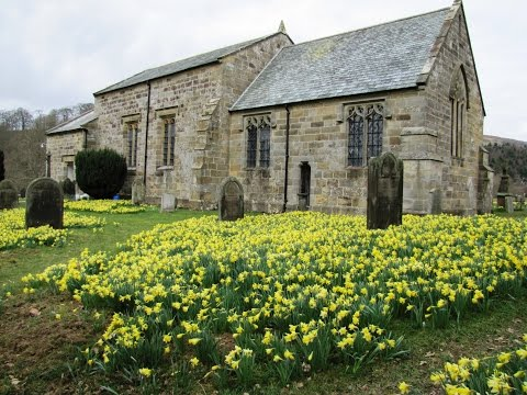 The Farndale Daffodil Walk round | north york moors  Walks