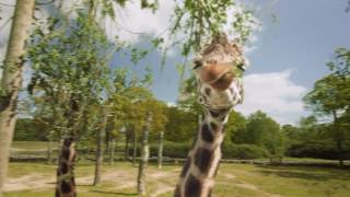 Manchester's IF agency has produced a TV campaign for Knowsley Safari, highlighting the amazing adventures families can have...
