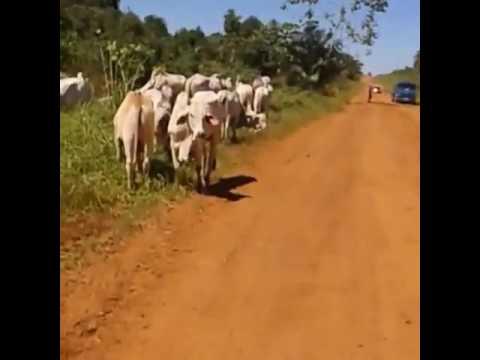 Na lida bruta do estradão com nossos amigos da Comitiva M5   Alta Floresta D Oeste - RO  Vídeo  envi