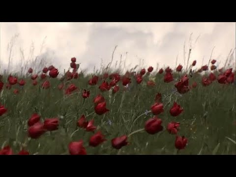 Rostow-am-Don-Naturreservat: Wo die wilden Tulpen blühen