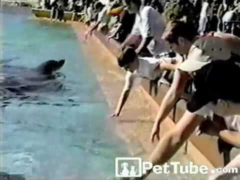 pettube - Apparently this dolphin thought the boy needed a shower!