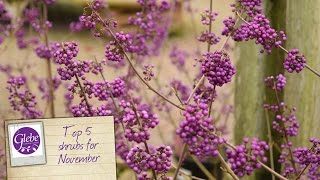 In this video Mike shows you this top 5 shrubs for planting in November.Visit http://www.glebegardencentre.co.uk for more information about Glebe Garden CentreLike us on Facebook - http://www.facebook.com/glebegcFollow us on Twitter - http://www.twitter.com/glebegc+1 us on Google - https://plus.google.com/b/103817263936258828598/+GlebeGardenCentre