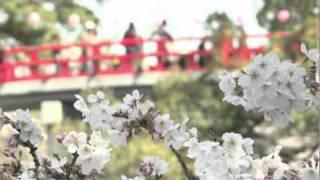 岡崎公園の桜まつりについて