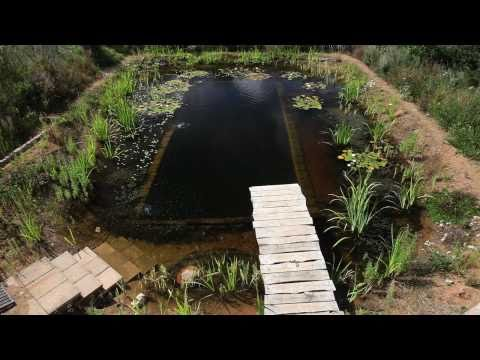 Natural Organic Pools – Large Aquaponics Pond?