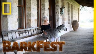 The Greatest Dane of All Never Leaves Your Side | BarkFest by Nat Geo WILD